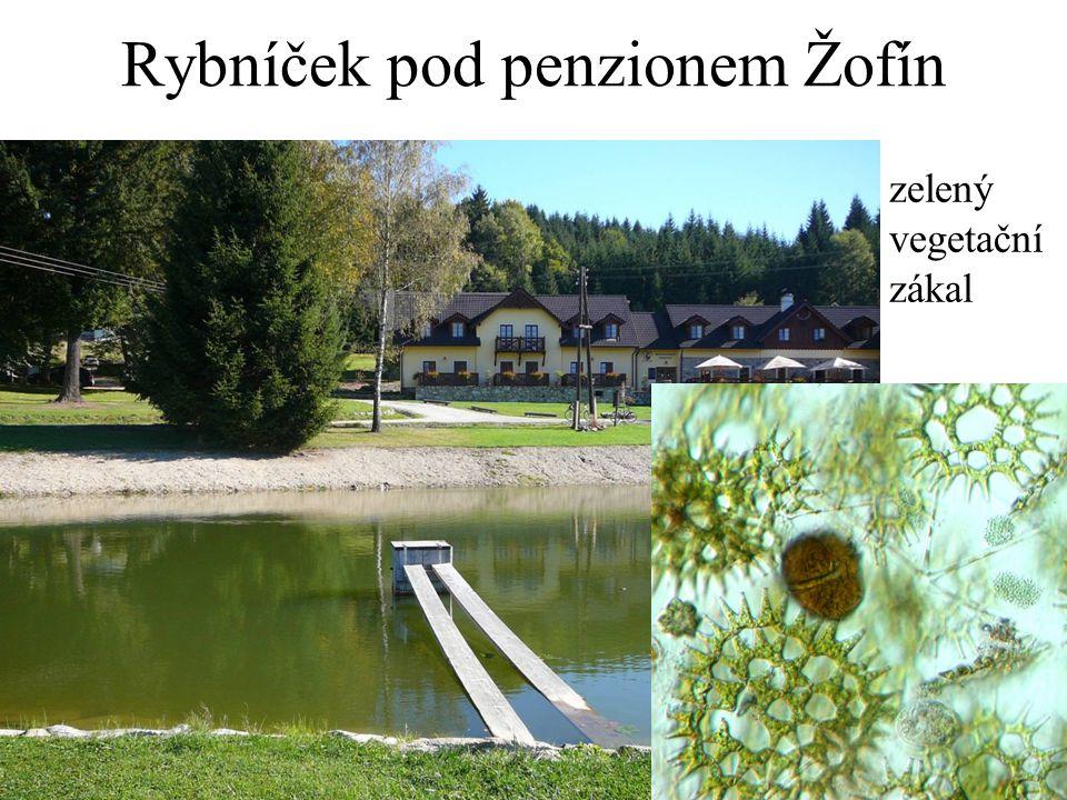 Plankton v rybníčku pod penzionem Obrněnky (Dinophyta): Peridinium Zelené řasy: Pediastrum duplex Krásnoočka (Euglenophyta): Phacus tortus Phacus longicauda Euglena