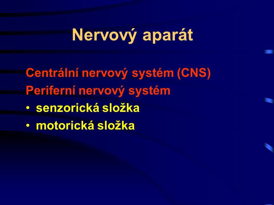 Nervový aparát Centrální nervový systém (CNS) Periferní nervový systém senzorická složka motorická složka