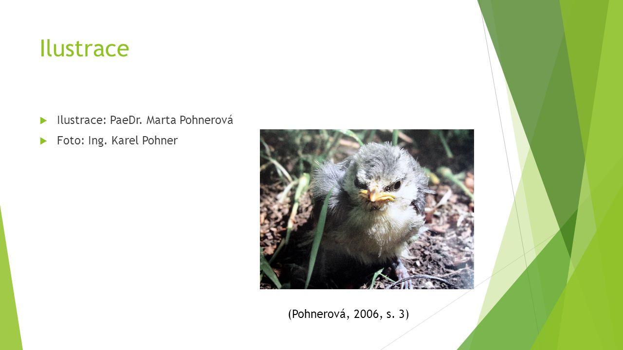Ilustrace  Ilustrace: PaeDr. Marta Pohnerová  Foto: Ing. Karel Pohner (Pohnerová, 2006, s. 3)