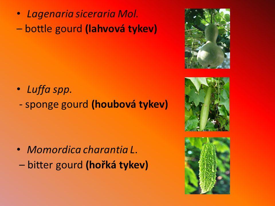 Lagenaria siceraria Mol. – bottle gourd (lahvová tykev) Luffa spp. - sponge gourd (houbová tykev) Momordica charantia L. – bitter gourd (hořká tykev)