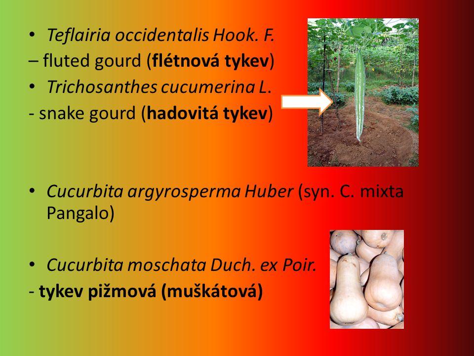 Teflairia occidentalis Hook. F. – fluted gourd (flétnová tykev) Trichosanthes cucumerina L. - snake gourd (hadovitá tykev) Cucurbita argyrosperma Hube