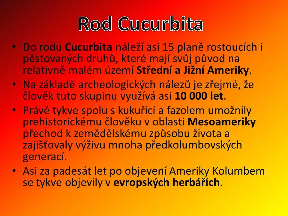 Do rodu Cucurbita náleží asi 15 planě rostoucích i pěstovaných druhů, které mají svůj původ na relativně malém území Střední a Jižní Ameriky. Na zákla