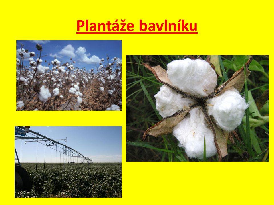 Otázky a úkoly : 1.Které státy Střední Asie jsou významnými producenty bavlníku.
