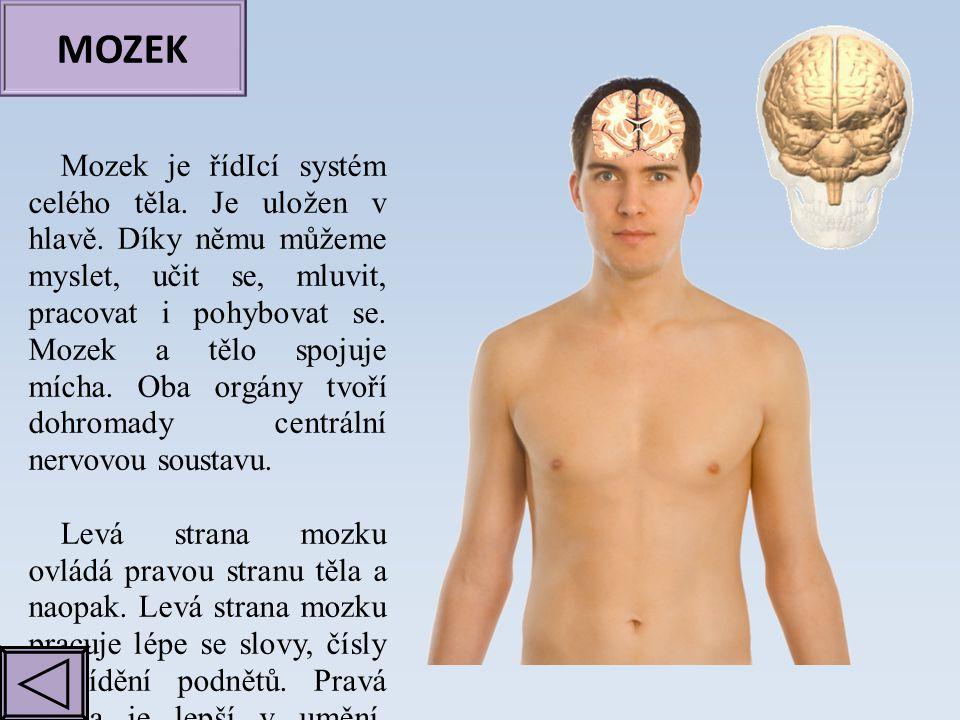 MOZEK Mozek je řídIcí systém celého těla. Je uložen v hlavě. Díky němu můžeme myslet, učit se, mluvit, pracovat i pohybovat se. Mozek a tělo spojuje m