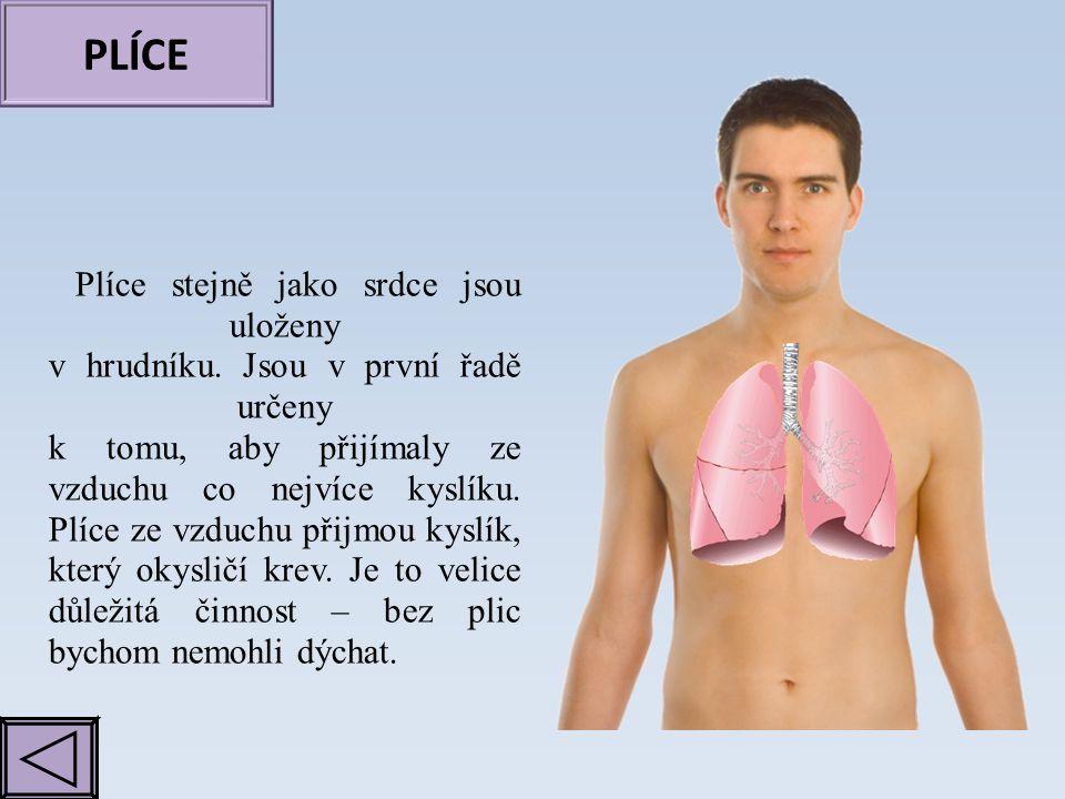 PLÍCE Plíce stejně jako srdce jsou uloženy v hrudníku. Jsou v první řadě určeny k tomu, aby přijímaly ze vzduchu co nejvíce kyslíku. Plíce ze vzduchu