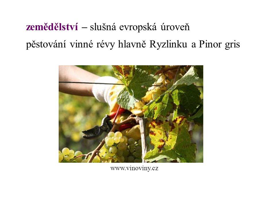 zemědělství – slušná evropská úroveň pěstování vinné révy hlavně Ryzlinku a Pinor gris www.vinoviny.cz