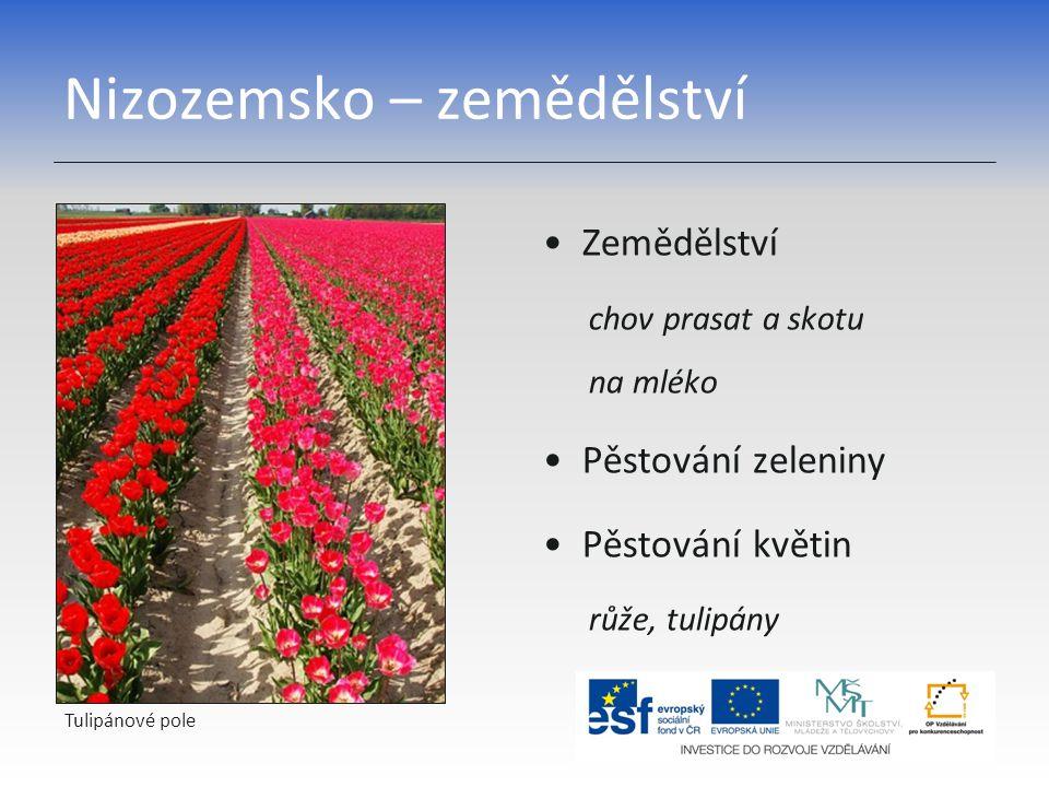 Nizozemsko – zemědělství Zemědělství chov prasat a skotu na mléko Pěstování zeleniny Pěstování květin růže, tulipány Tulipánové pole