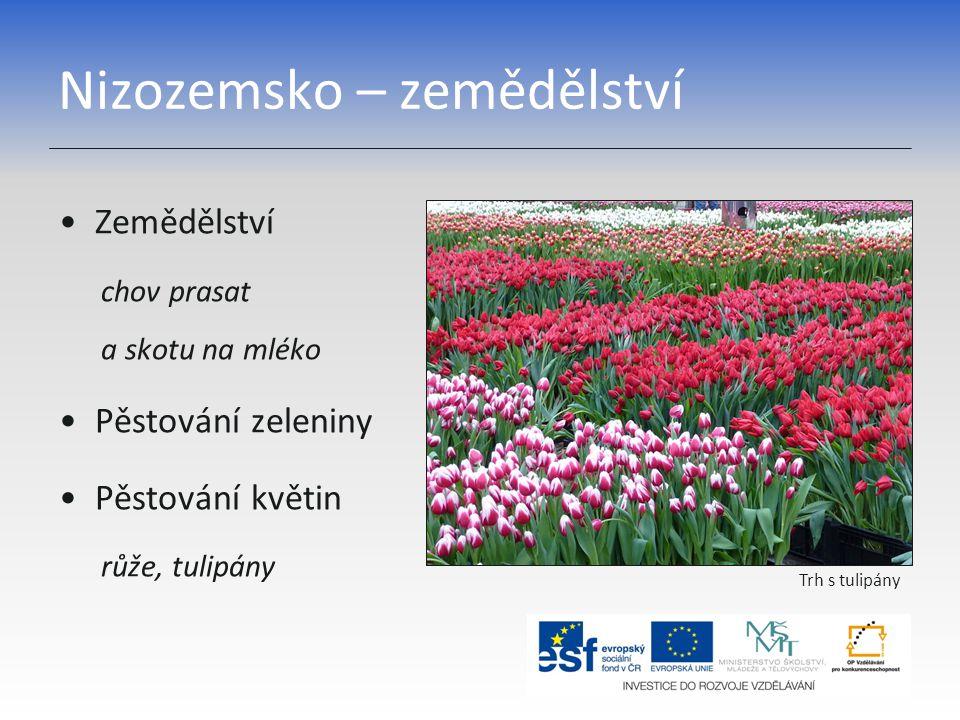 Nizozemsko – zemědělství Zemědělství chov prasat a skotu na mléko Pěstování zeleniny Pěstování květin růže, tulipány Trh s tulipány