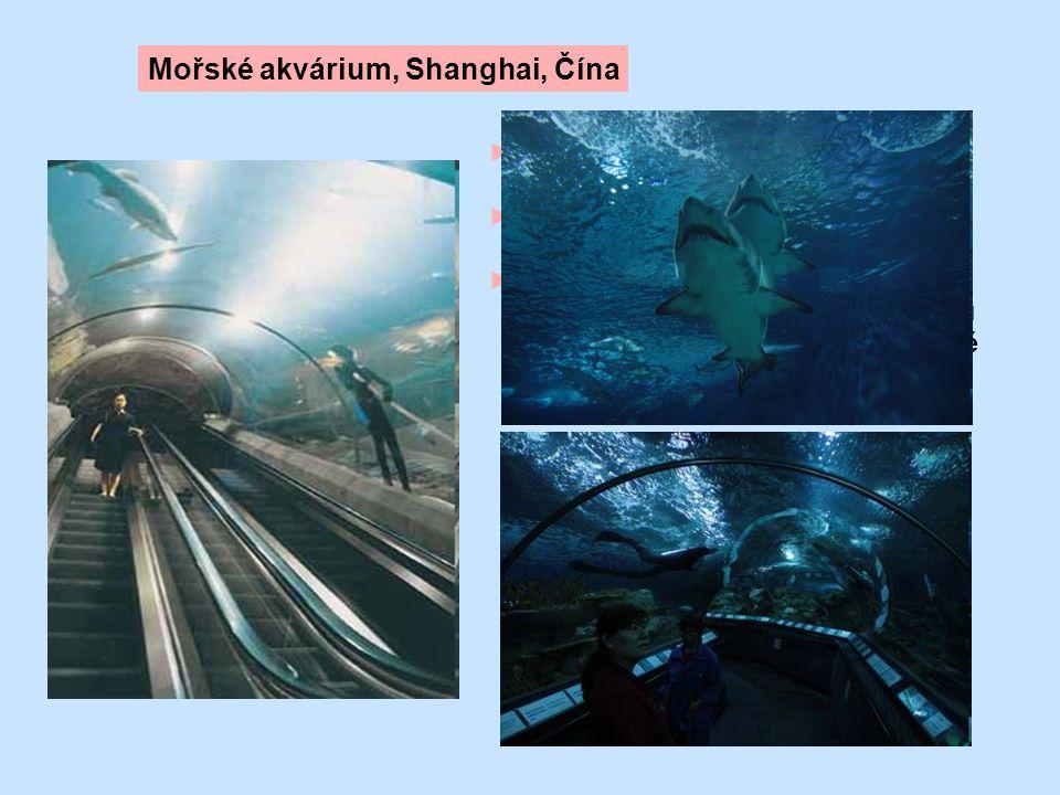 ►8 eskalátorů a 3 výtahy ► zdvih eskalátoru až do 13 m ► dvojice 12-ti metrových eskalátorů je instalována ve skleněném tunelu v uměle vytvořeném mořs