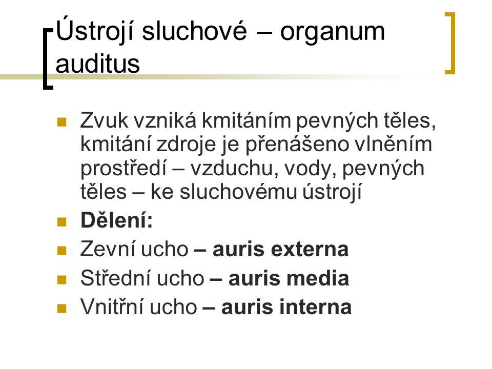Ústrojí sluchové – organum auditus Zvuk vzniká kmitáním pevných těles, kmitání zdroje je přenášeno vlněním prostředí – vzduchu, vody, pevných těles –