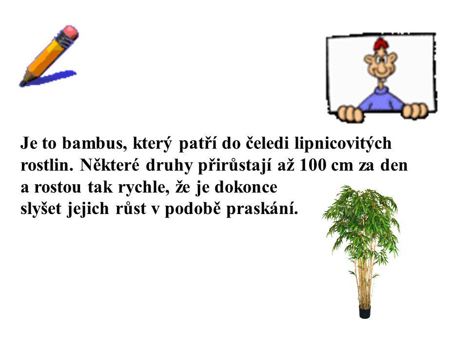 ŘEŠENÍ Je to bambus, který patří do čeledi lipnicovitých rostlin. Některé druhy přirůstají až 100 cm za den a rostou tak rychle, že je dokonce slyšet