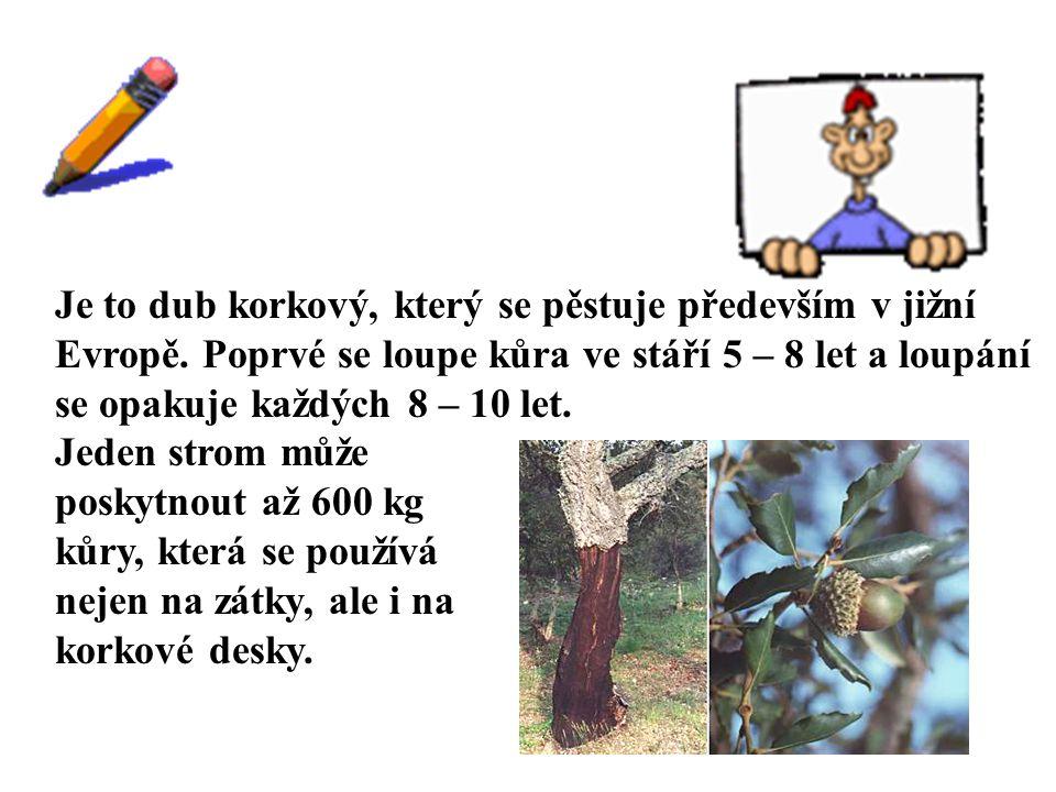 ŘEŠENÍ Je to dub korkový, který se pěstuje především v jižní Evropě. Poprvé se loupe kůra ve stáří 5 – 8 let a loupání se opakuje každých 8 – 10 let.