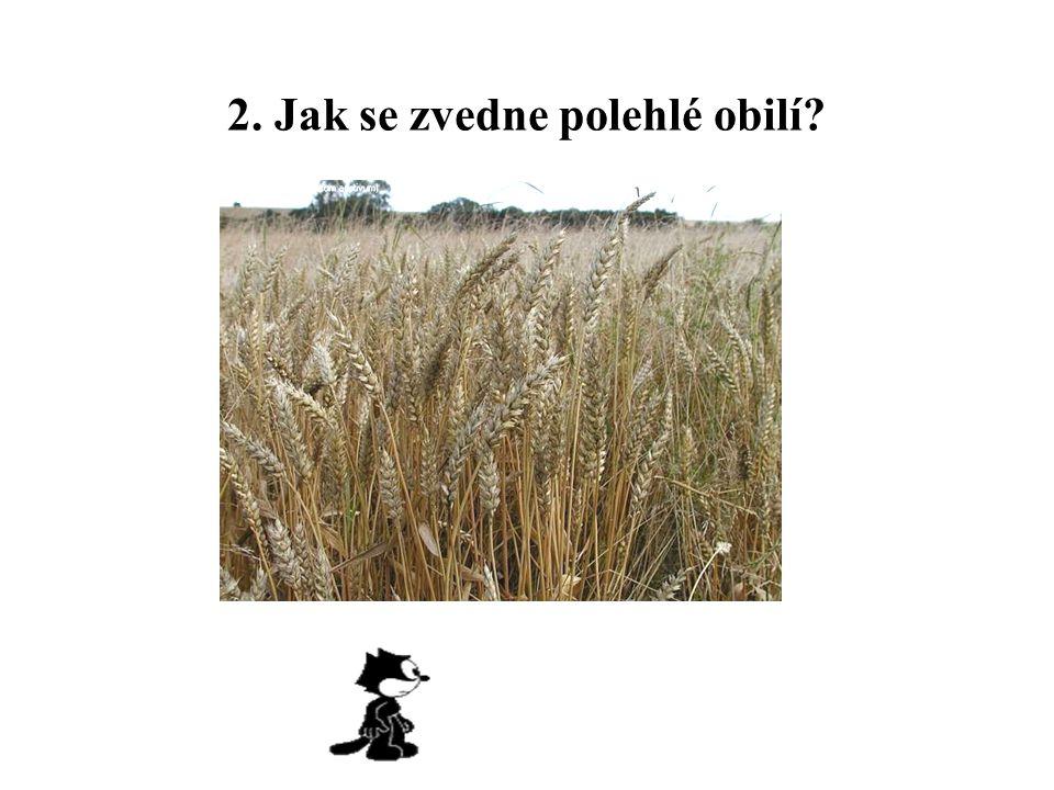 2. Jak se zvedne polehlé obilí?
