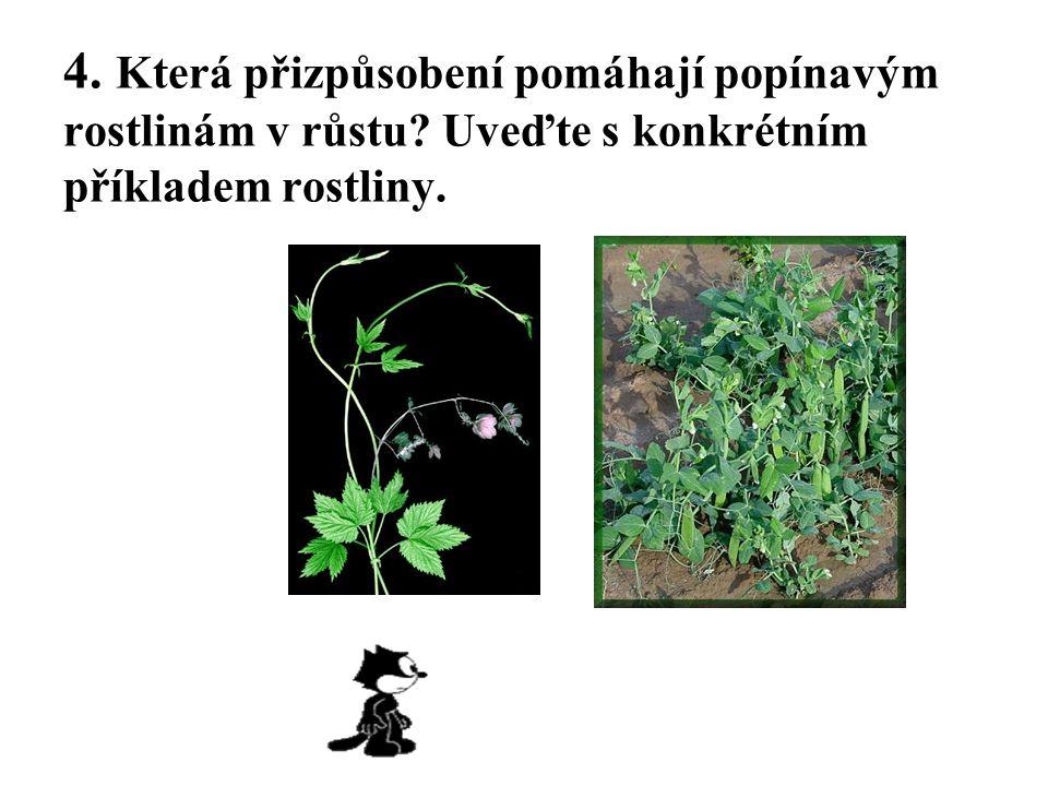 4. Která přizpůsobení pomáhají popínavým rostlinám v růstu? Uveďte s konkrétním příkladem rostliny.