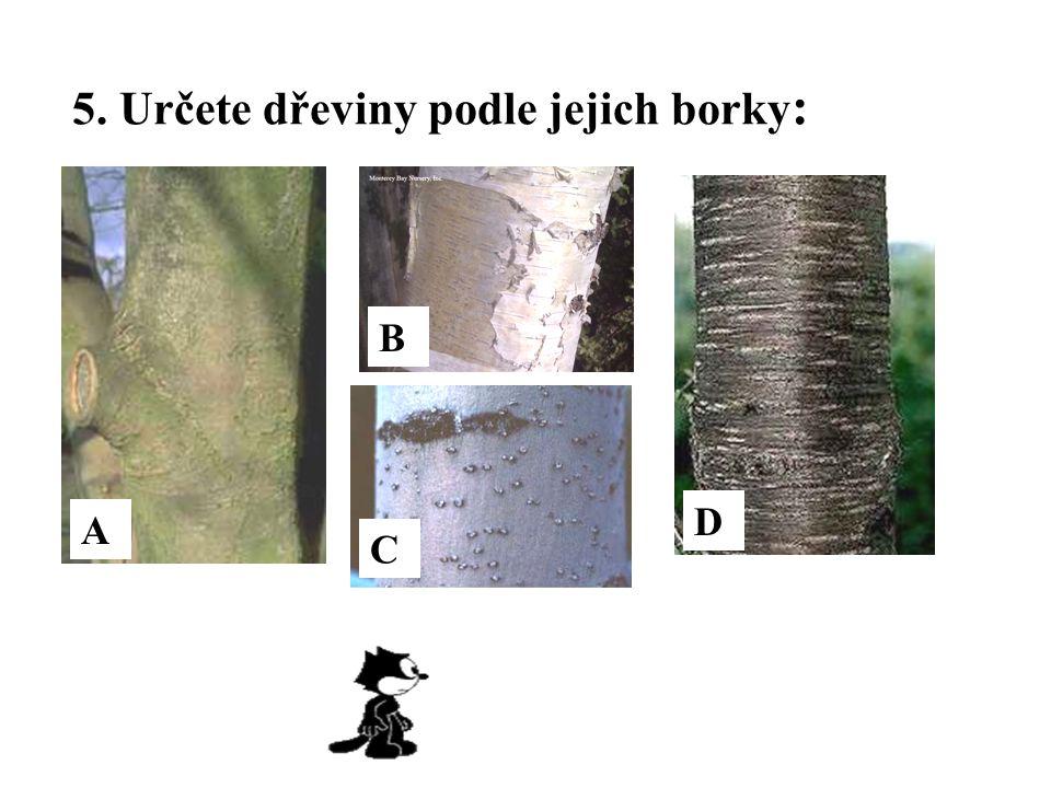 5. Určete dřeviny podle jejich borky : A C B D