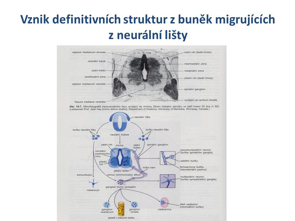 Buněčná asociace spojování jednotlivých buněk ve vyšší funkční celky, jako předpoklad pro synchronizaci jejich funkce CAM – cell adhesive molecules, cadheriny, mezibuněčné spoje buněčné syncytium v kosterním svalu, neurony angiogeneze