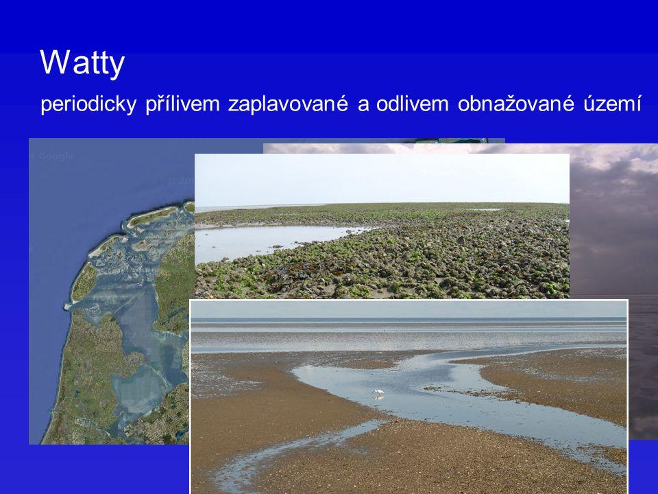 Watty periodicky přílivem zaplavované a odlivem obnažované území