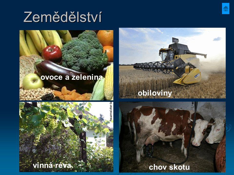 Zemědělství obiloviny vinná réva ovoce a zelenina chov skotu