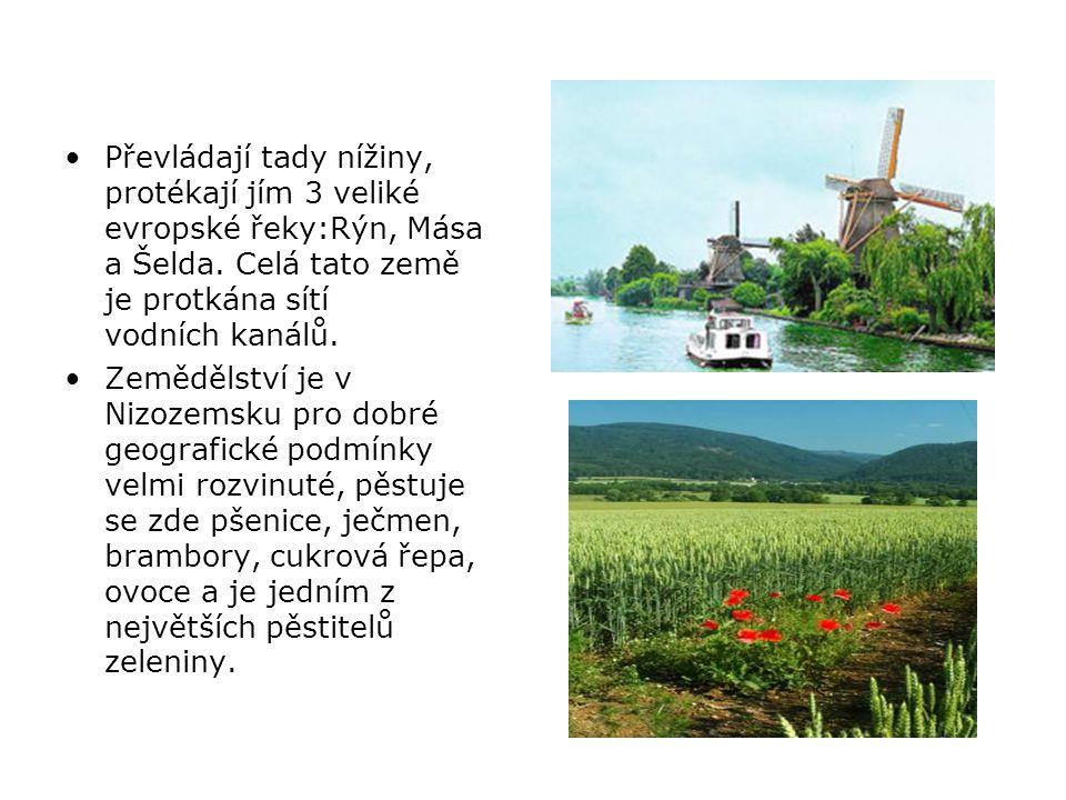 Holandsko je nazýváno zemí větrných mlýnů a květin (zejména tulipánů).