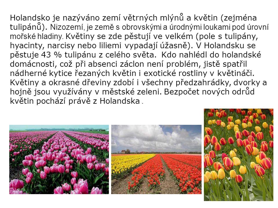 Holandsko je nazýváno zemí větrných mlýnů a květin (zejména tulipánů). Nizozemí, je země s obrovskými a úrodnými loukami pod úrovní mořské hladiny. Kv