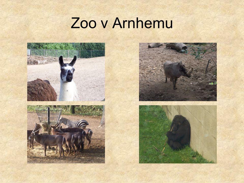 Zoo v Arnhemu