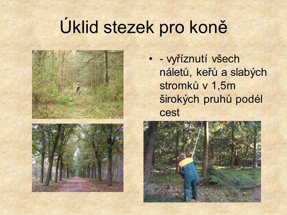 Úklid stezek pro koně - vyříznutí všech náletů, keřů a slabých stromků v 1,5m širokých pruhů podél cest