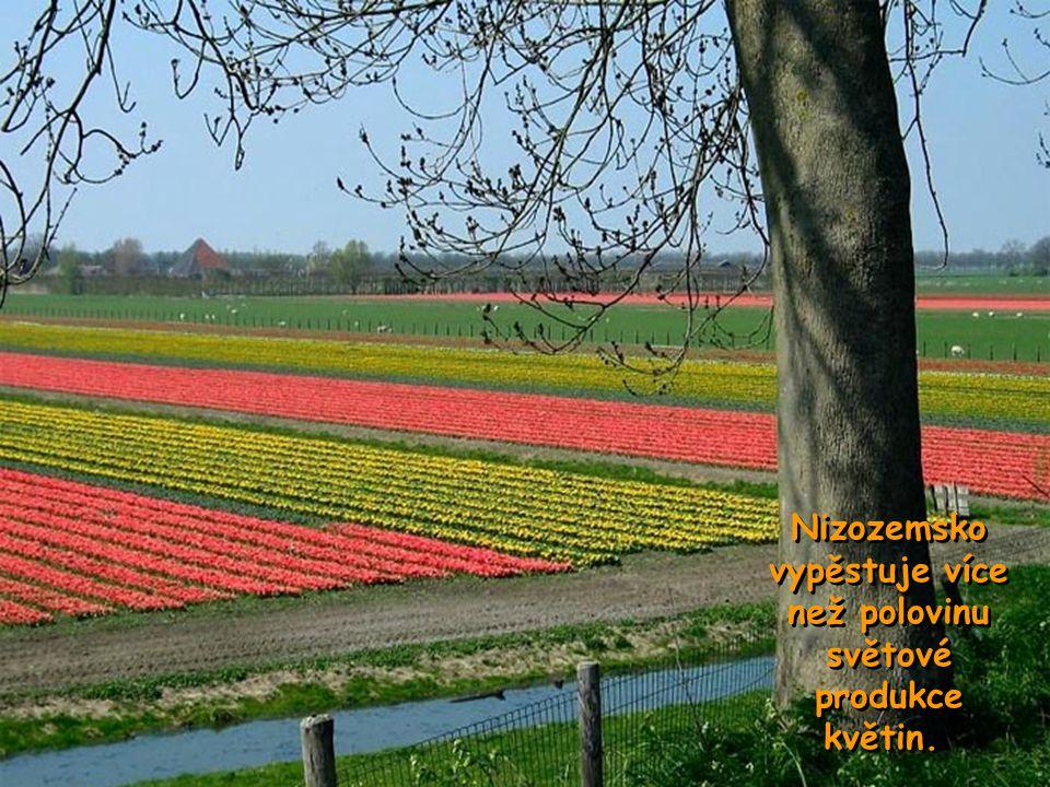 Amsterdam je městem tulipánů, dřeváků, diamantů a porcelánu Amsterdam je městem tulipánů, dřeváků, diamantů a porcelánu