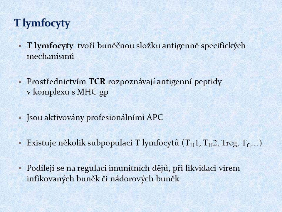  T lymfocyty tvoří buněčnou složku antigenně specifických mechanismů  Prostřednictvím TCR rozpoznávají antigenní peptidy v komplexu s MHC gp  Jsou