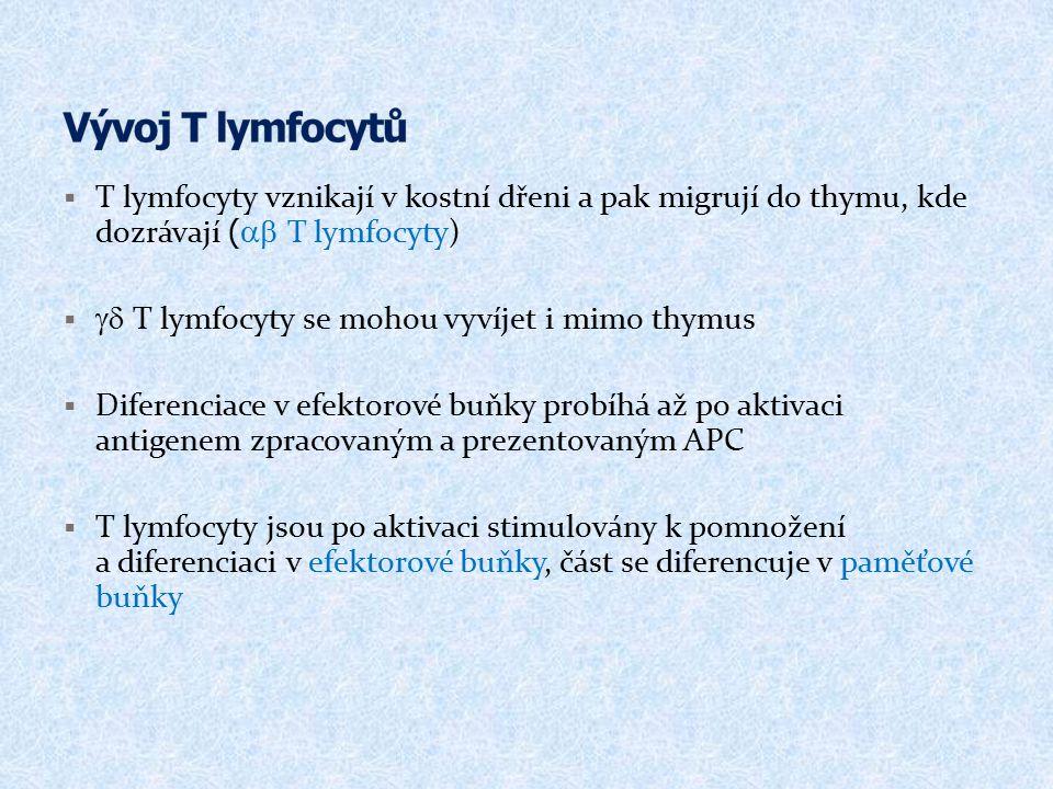  T lymfocyty vznikají v kostní dřeni a pak migrují do thymu, kde dozrávají (  T lymfocyty)   T lymfocyty se mohou vyvíjet i mimo thymus  Dife