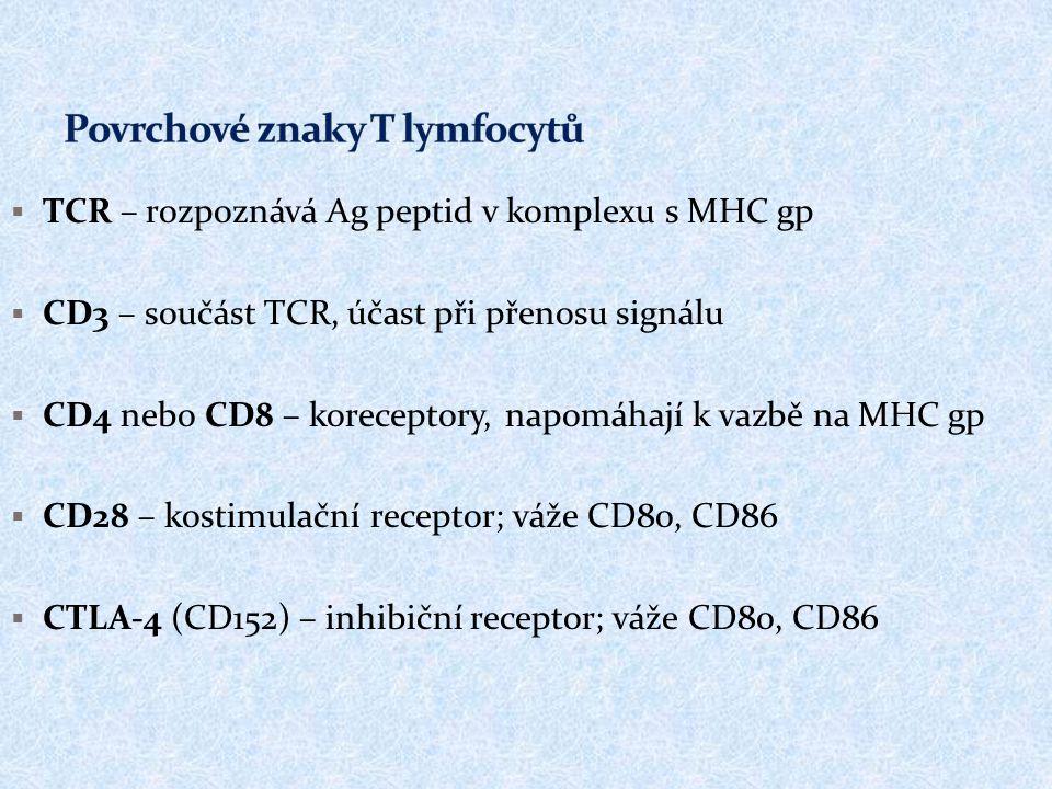  TCR – rozpoznává Ag peptid v komplexu s MHC gp  CD3 – součást TCR, účast při přenosu signálu  CD4 nebo CD8 – koreceptory, napomáhají k vazbě na MH