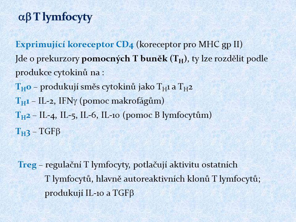 Exprimující koreceptor CD4 (koreceptor pro MHC gp II) Jde o prekurzory pomocných T buněk (T H ), ty lze rozdělit podle produkce cytokinů na : T H 0 –