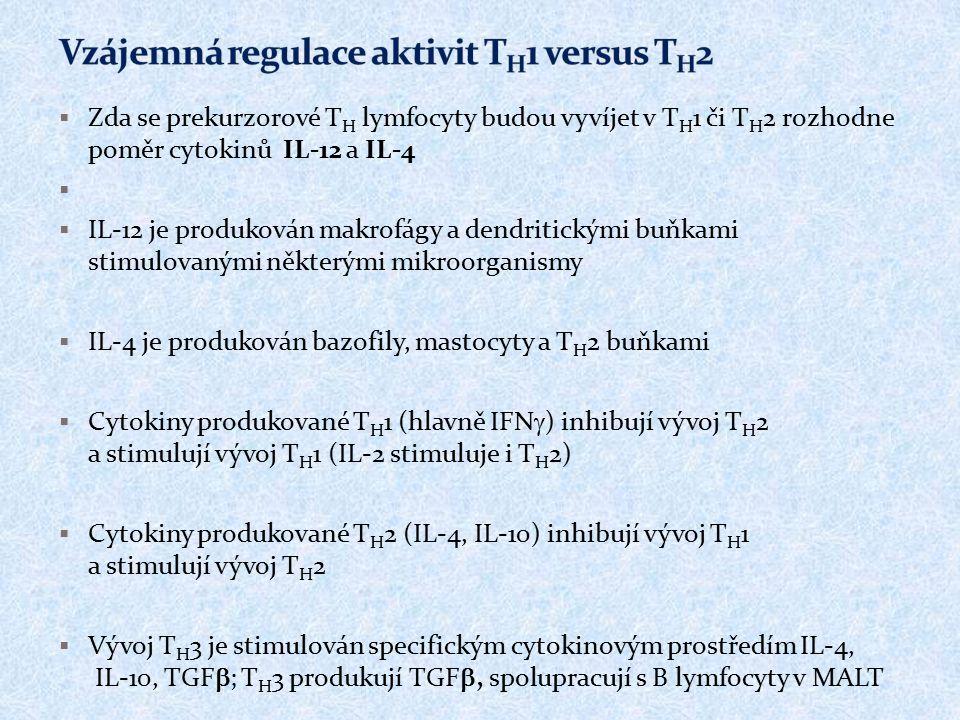  Zda se prekurzorové T H lymfocyty budou vyvíjet v T H 1 či T H 2 rozhodne poměr cytokinů IL-12 a IL-4   IL-12 je produkován makrofágy a dendritick