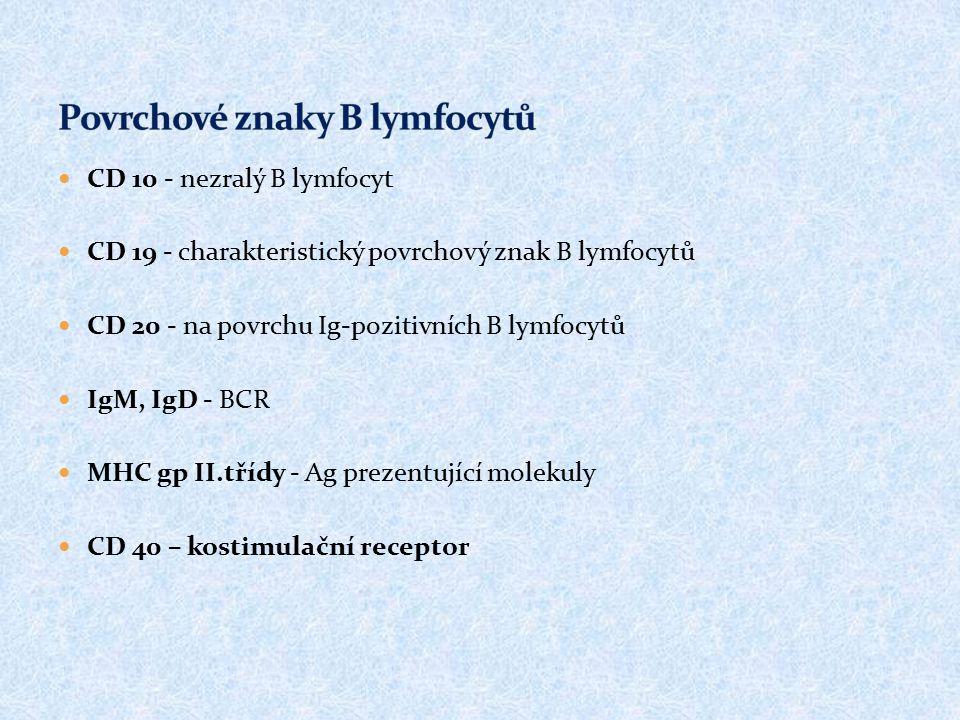 CD 10 - nezralý B lymfocyt CD 19 - charakteristický povrchový znak B lymfocytů CD 20 - na povrchu Ig-pozitivních B lymfocytů IgM, IgD - BCR MHC gp II.