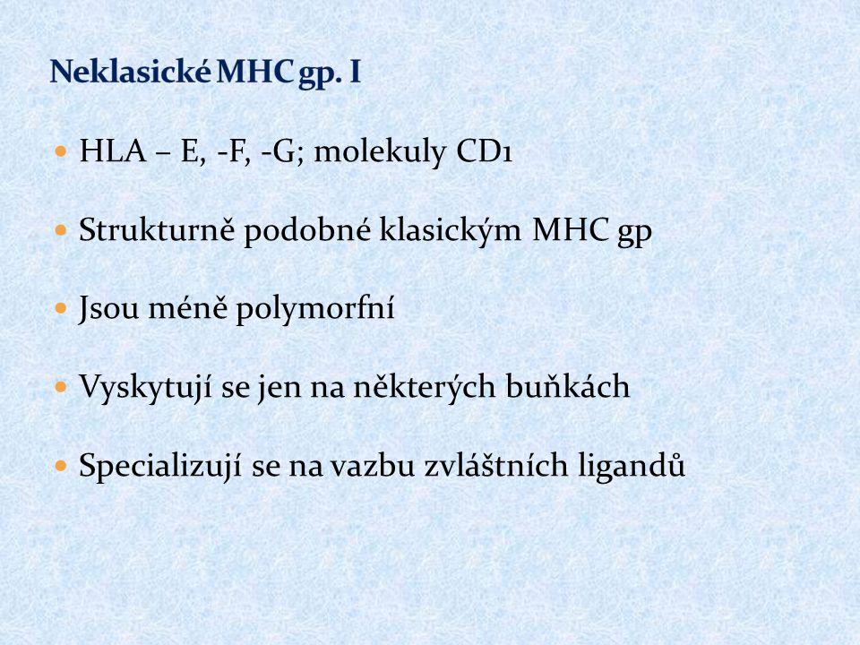 HLA – E, -F, -G; molekuly CD1 Strukturně podobné klasickým MHC gp Jsou méně polymorfní Vyskytují se jen na některých buňkách Specializují se na vazbu