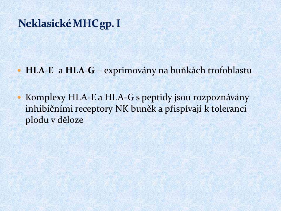 HLA-E a HLA-G – exprimovány na buňkách trofoblastu Komplexy HLA-E a HLA-G s peptidy jsou rozpoznávány inhibičními receptory NK buněk a přispívají k to