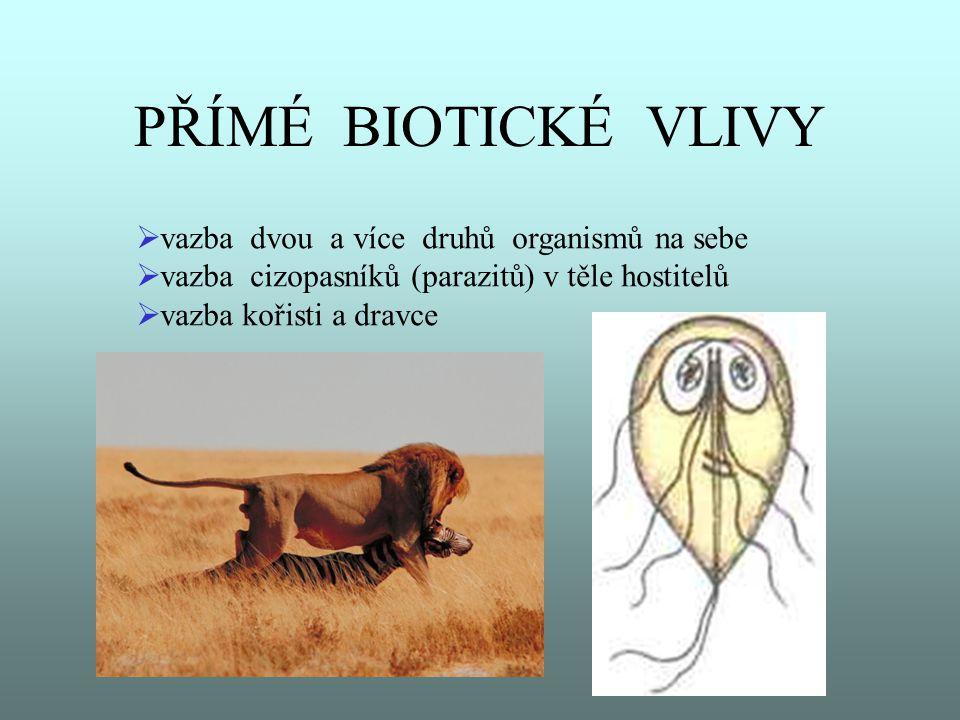 PŘÍMÉ BIOTICKÉ VLIVY  vazba dvou a více druhů organismů na sebe  vazba cizopasníků (parazitů) v těle hostitelů  vazba kořisti a dravce