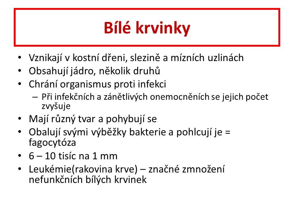 osel.cz