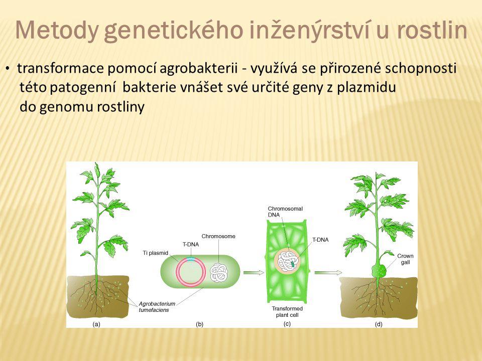 Metody genetického inženýrství u rostlin transformace pomocí agrobakterii - využívá se přirozené schopnosti této patogenní bakterie vnášet své určité geny z plazmidu do genomu rostliny