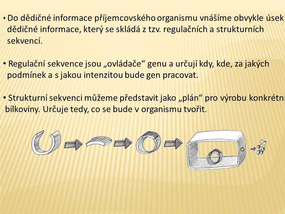 Do dědičné informace příjemcovského organismu vnášíme obvykle úsek dědičné informace, který se skládá z tzv.
