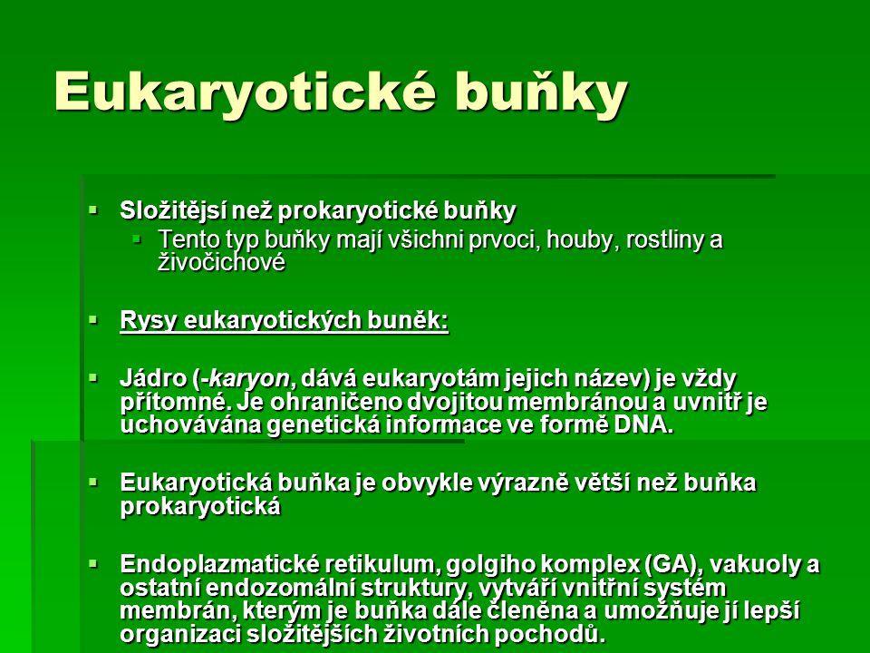 Eukaryotické buňky  Složitějsí než prokaryotické buňky  Tento typ buňky mají všichni prvoci, houby, rostliny a živočichové  Rysy eukaryotických bun