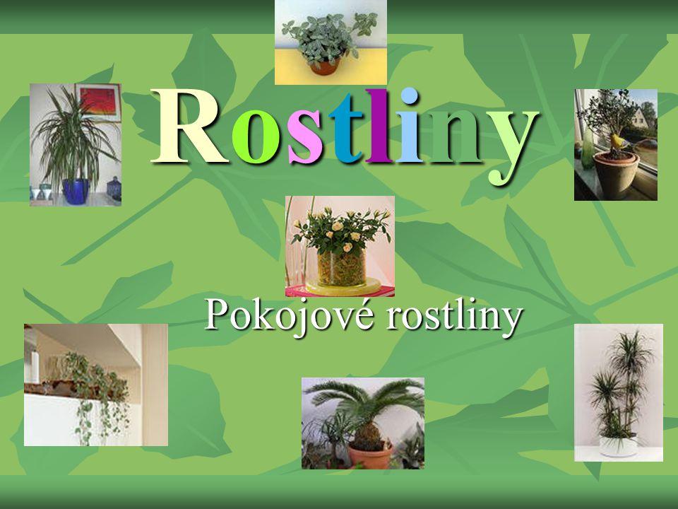 Pokojové rostliny Rostliny
