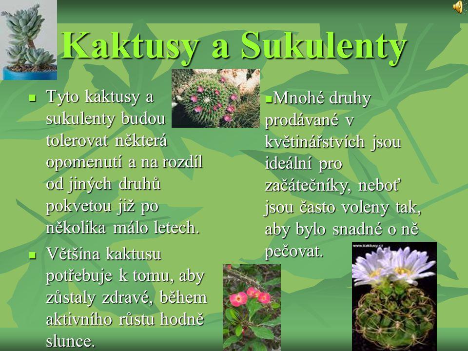 Kaktusy a Sukulenty Tyto kaktusy a sukulenty budou tolerovat některá opomenutí a na rozdíl od jiných druhů pokvetou již po několika málo letech. Tyto
