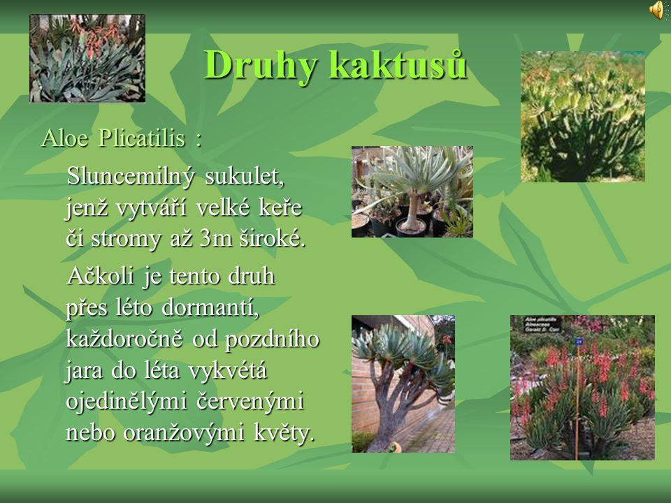 Druhy kaktusů Aloe Plicatilis : Sluncemilný sukulet, jenž vytváří velké keře či stromy až 3m široké. Sluncemilný sukulet, jenž vytváří velké keře či s