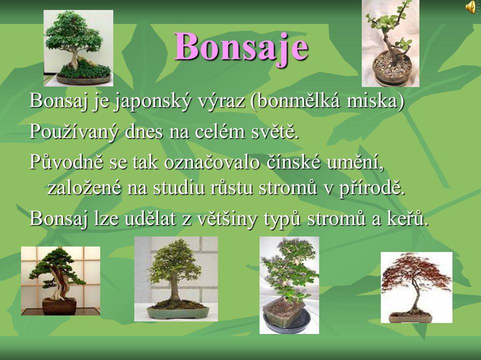 Bonsaje Bonsaj je japonský výraz (bonmělká miska) Používaný dnes na celém světě. Původně se tak označovalo čínské umění, založené na studiu růstu stro