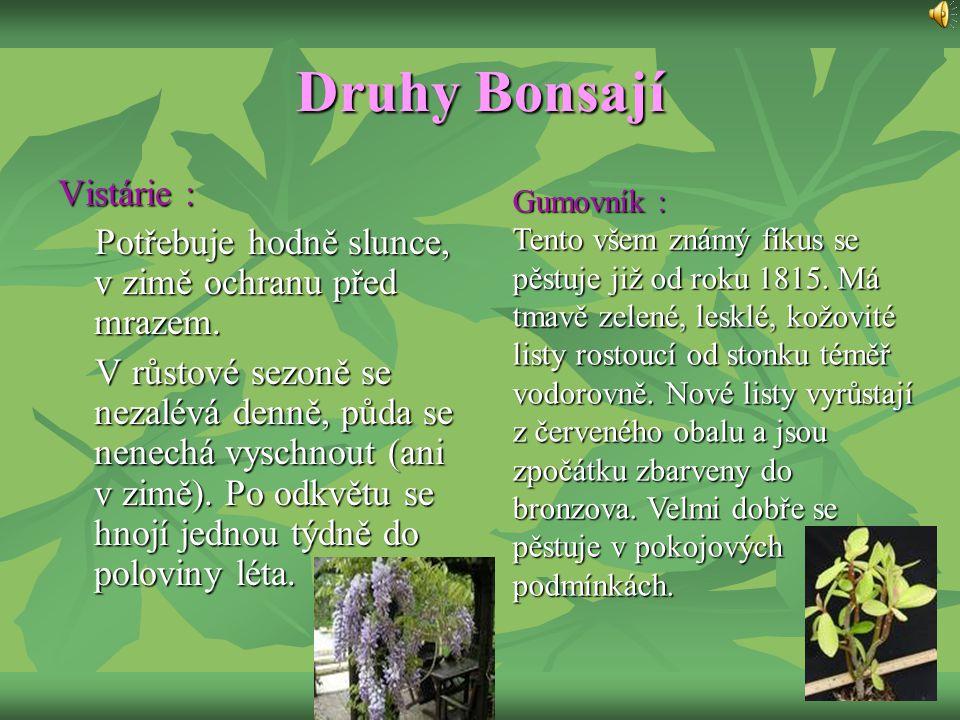 Druhy Bonsají Vistárie : Potřebuje hodně slunce, v zimě ochranu před mrazem. V růstové sezoně se nezalévá denně, půda se nenechá vyschnout (ani v zimě