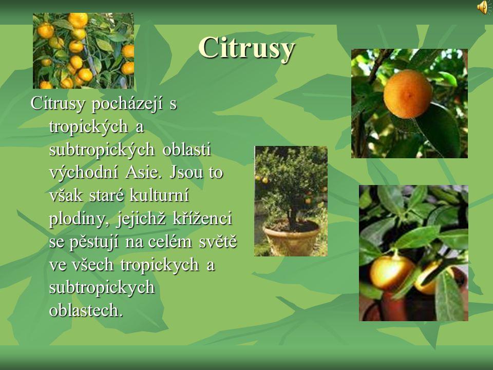 Citrusy Citrusy pocházejí s tropických a subtropických oblasti východní Asie. Jsou to však staré kulturní plodiny, jejichž kříženci se pěstují na celé