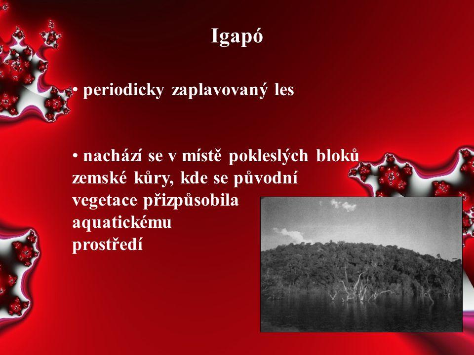 Igapó periodicky zaplavovaný les nachází se v místě pokleslých bloků zemské kůry, kde se původní vegetace přizpůsobila aquatickému prostředí