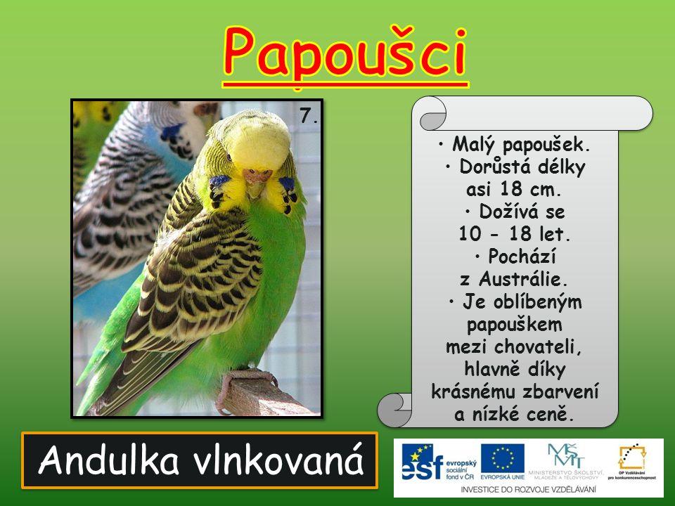 Andulka vlnkovaná 7. Malý papoušek. Dorůstá délky asi 18 cm. Dožívá se 10 - 18 let. Pochází z Austrálie. Je oblíbeným papouškem mezi chovateli, hlavně