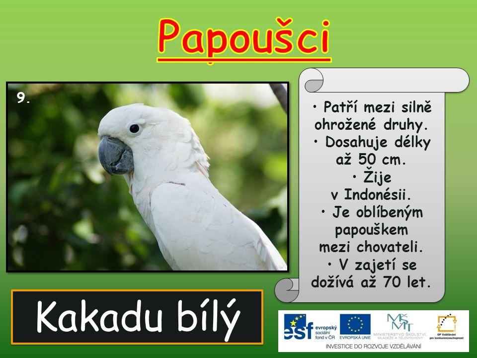 Kakadu bílý 9. Patří mezi silně ohrožené druhy. Dosahuje délky až 50 cm. Žije v Indonésii. Je oblíbeným papouškem mezi chovateli. V zajetí se dožívá a