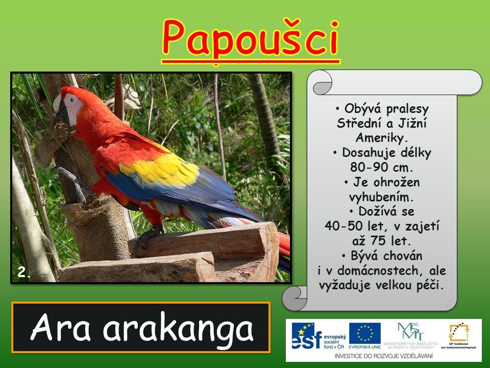 Ara arakanga 2. Obývá pralesy Střední a Jižní Ameriky. Dosahuje délky 80-90 cm. Je ohrožen vyhubením. Dožívá se 40-50 let, v zajetí až 75 let. Bývá ch